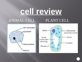 Cells a jeopardy review game on animal and plant cells by jennifer cells a jeopardy review game on animal and plant cells ccuart Choice Image