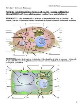 Cells Alive Webquest