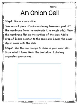 Cells:  Animal Cells and Plant Cells and Organelles