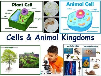Cells & Animal Kingdoms Lesson & Flashcards-class unit, study guide, exam prep