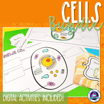Cells Bundle