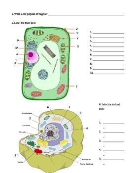 Cells - Cells Webquest