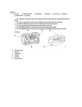 Cells & Cellular Processes Test