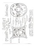Cells Comparison Doodle Notes