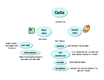 Cells Concept Map