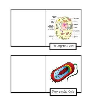 Cells Lap Book