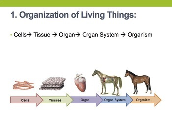 Cells Living Environment Regents Review - One Page Wonder + Powerpoint