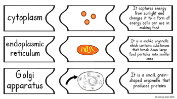 Cells Matching Activity