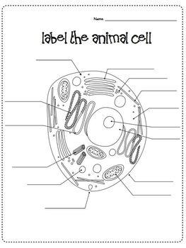 Cells & Microscope Activity Unit