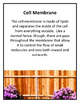 Cells - Organelles Posters