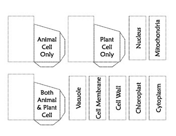 Plant & Animal Cell Parts Card Sort