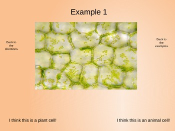Cells - Plant or Animal Powerpoint Practice