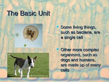 Cells PowerPoint Presentation