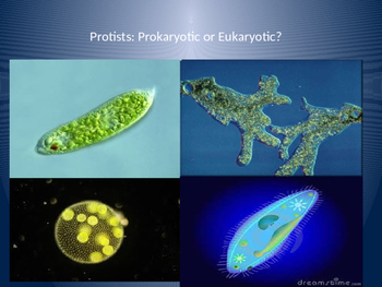 Cells Protists Review Powerpoint