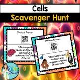 Cells Scavenger Hunt