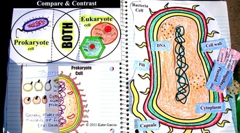 Cells - Science Interactive Notebook Activities