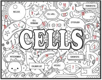 Cells Seek and Find Science Doodle Page