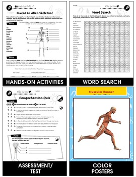Cells, Skeletal & Muscular Systems: The Muscular System - Muscles Gr. 5-8
