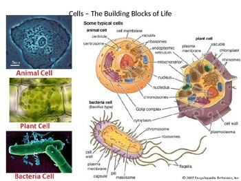 Cells Structure & Function