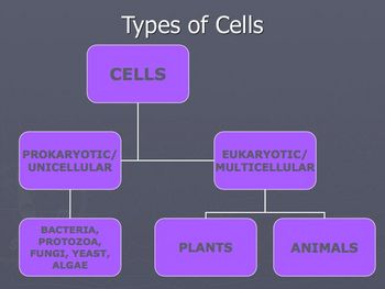 Cells- Structure, Parts, and Function