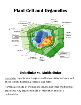 Study Support Packet: Cells Unit