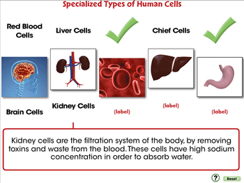 Cells-The Building Blocks of Life - NOTEBOOK Gr. 3-8