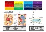 Cells - The Fundamentals