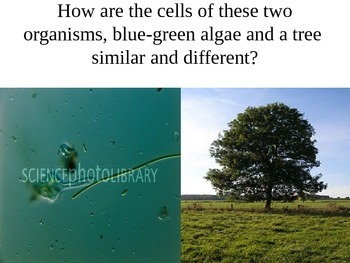 Cells: The Organization of Living Things