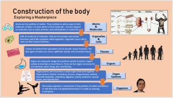 Cells, Tissues, Organs, Organ Systems: Exploring a Masterpiece