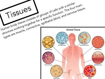 Cells, Tissues, Organs and Organ Systems Jigsaw