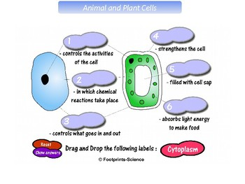 Cells Tissues and Organs Overview