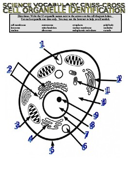 Cells : Types and Organelles (Article and Puzzle)