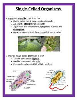Cells Unit - STUDY GUIDE - 5th Grade Science