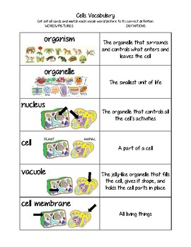 Cells Vocab