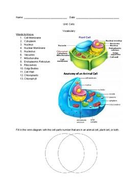 Cells Vocabulary