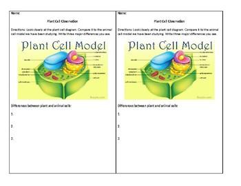 Warmup Set: Cells