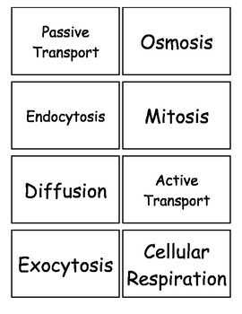 Cells Flashcards _ Set 2, Middle school Science, 6-8 Science