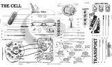 Biology - Cells and Cellular Transport Notes / Review