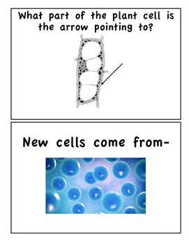 Cells and Living Systems Around the World Cards SOL 5.5