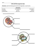 Cells and Micro-organisms Quiz