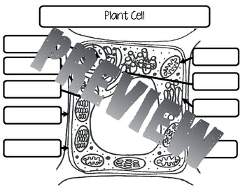 Cells and Microorganisms Interactive Notebook