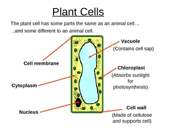 Cells and Organ Systems Powerpoint