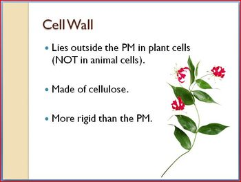 Cells and Organelles Notes PPT