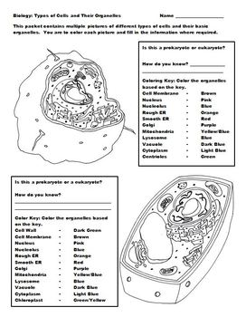 Cells and Their Organelles Coloring Packet