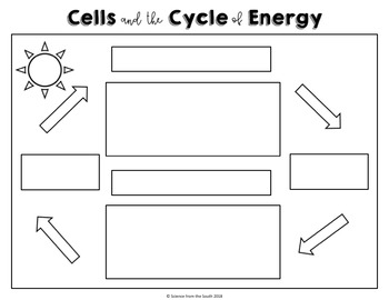 Cells and Energy Bundle Review Photosynthesis and Cellular Respiration
