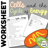 Cell Energy Worksheet for Review or Assessment of Photosynthesis and Respiration