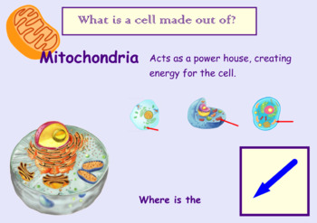 Cells and the Organelles That Bring Them to Life