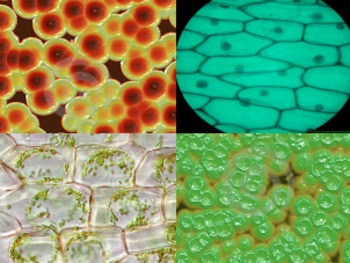 Cells are the Building Blocks of Life - Lesson Presentation, Activities