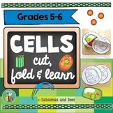 Plant and Animal Cells- Interactive Science Notebook foldables