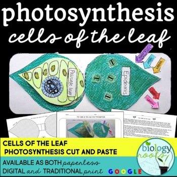 photosynthesis and cells of the leaf by biology roots tpt. Black Bedroom Furniture Sets. Home Design Ideas